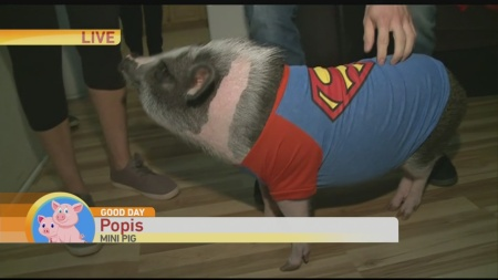 popis-the-pig-1