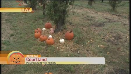 pumpkin-in-pears-1