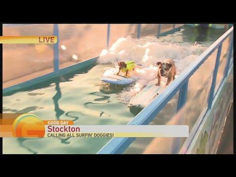 surfin-dog-1
