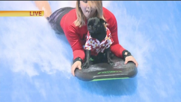 surfing-dog-ozy-1