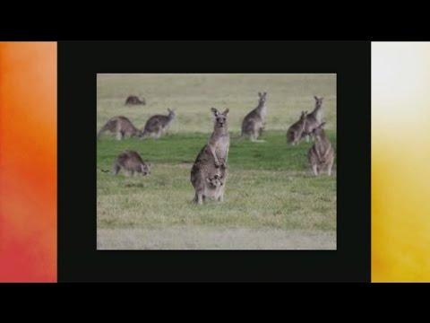 animal-groups-1