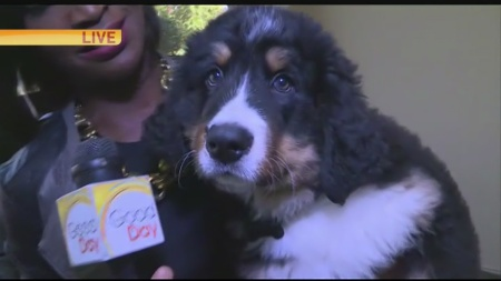 new-puppy-follow-up-1