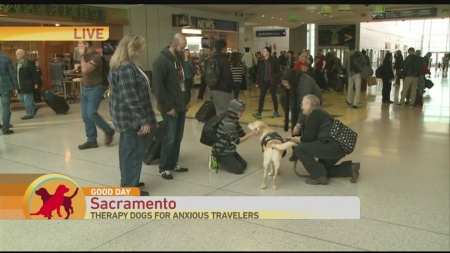 airport-dogs-1