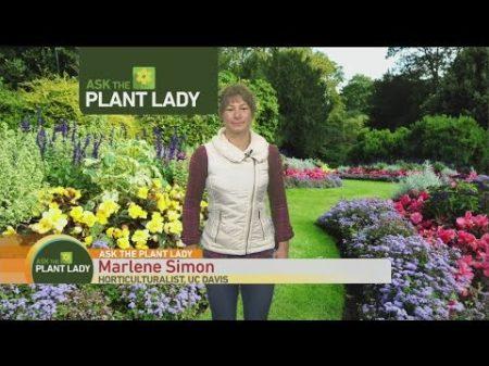 dec-18-plant-lady-1