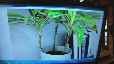 dec-18-plant-lady-5