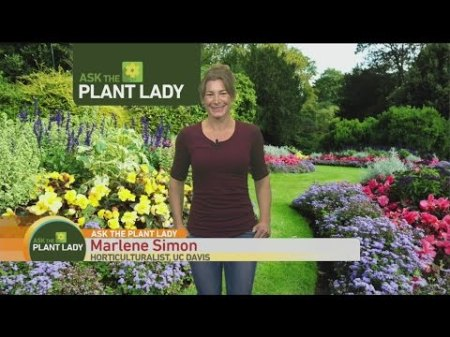 dec-4-plant-lady-1