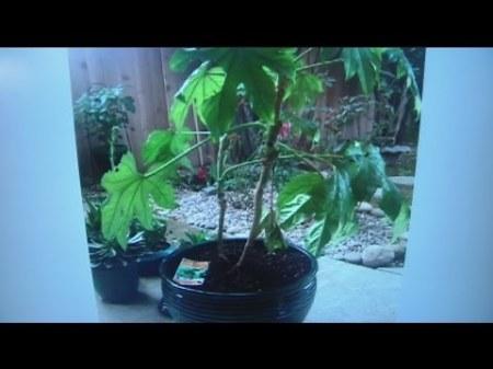 dec-4-plant-lady-2