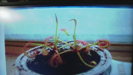 dec-4-plant-lady-3