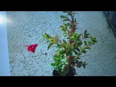 dec-4-plant-lady-4