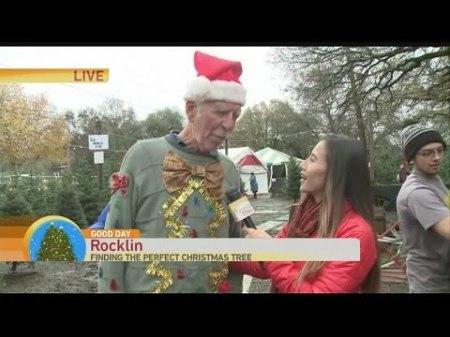 dougs-christmas-trees-1