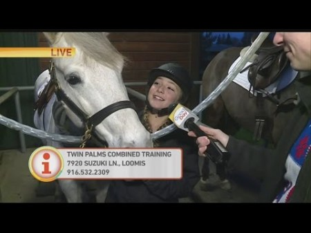 twin-palms-horse-1