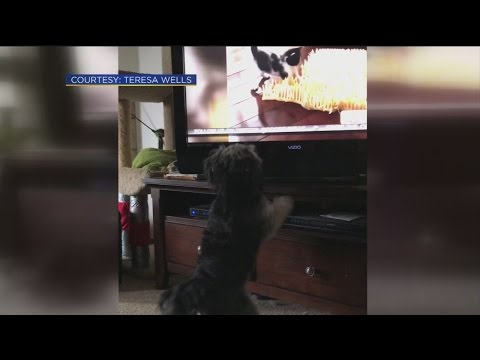dog-watches-good-day-1