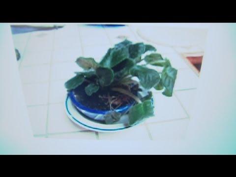jan-15-plant-3
