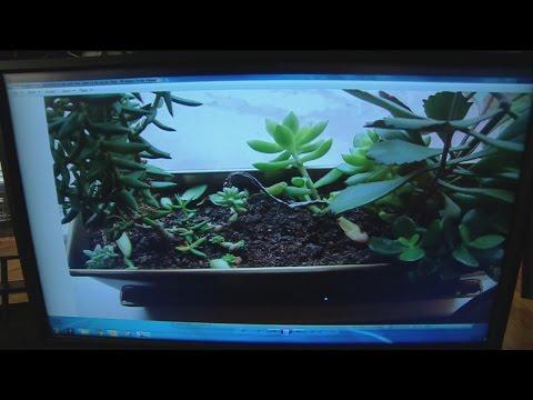 jan-15-plant-4