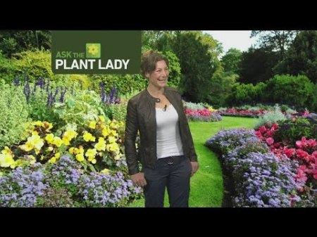 jan-29-plant-lady-1