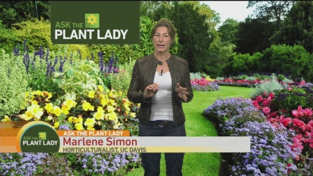 jan-29-plant-lady-2