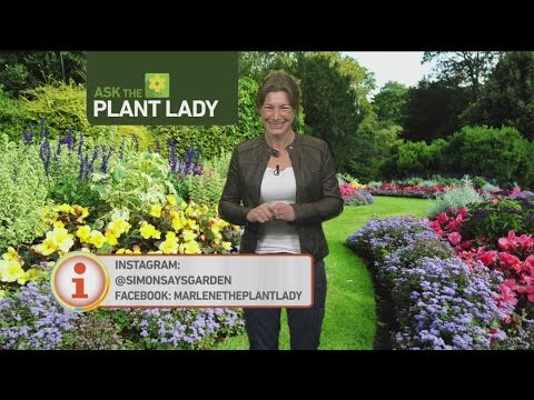 jan-29-plant-lady-3