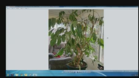 jan-29-plant-lady-4