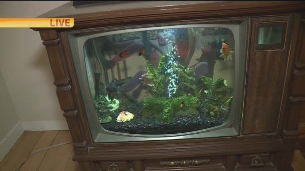 tv-fish-tank-1