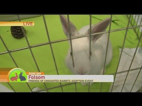 bunny-adopt-1
