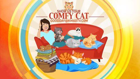 comfy-cat-1