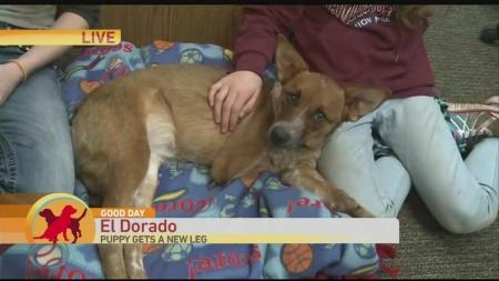 dog-3d-leg-2