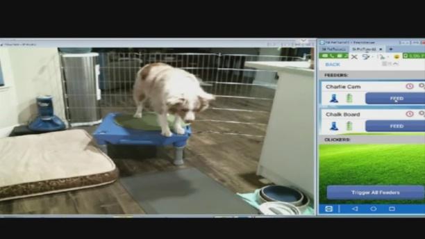dog-tutor-1