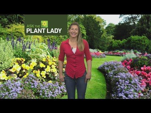 feb-12-plant-lady-1