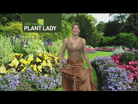 feb-26-plant-lady-2