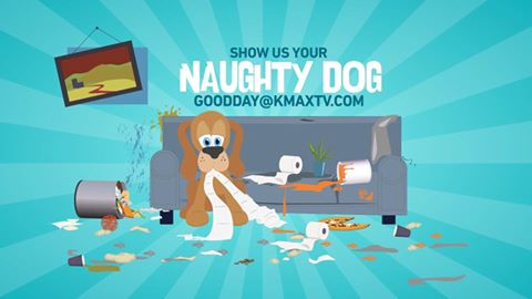 naughty-dog-1