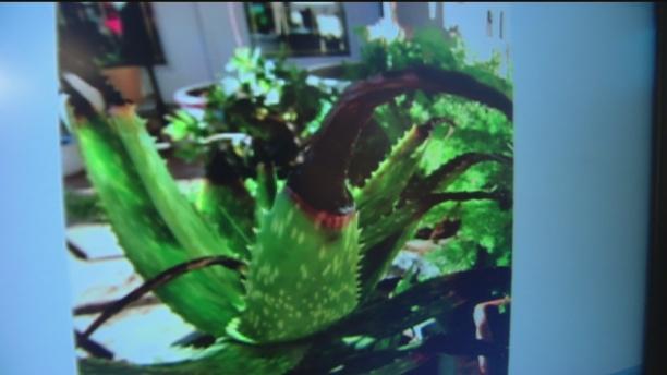 March 12 Plant Lady 3