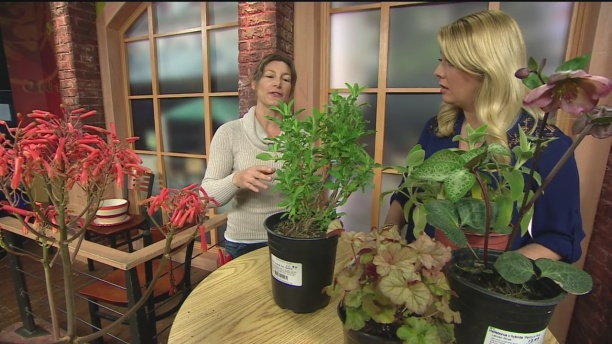 March 12 Plant Lady 6
