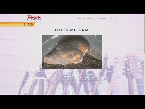 Owl Cam 1