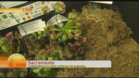 Plant Exhibit 1