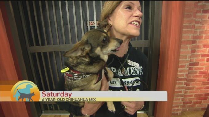 SPCA Saturday 1