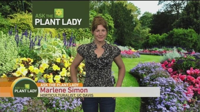 April 30 Plant Lady 2