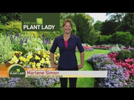 April 9 Plant Lady 1