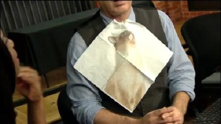Cat Napkin 1