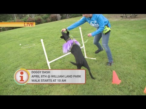 Doggy Dash Preview 1