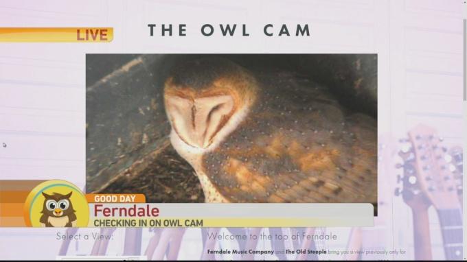 Ferndale Owl Cam 1