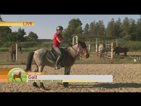 Hope for Horses 2