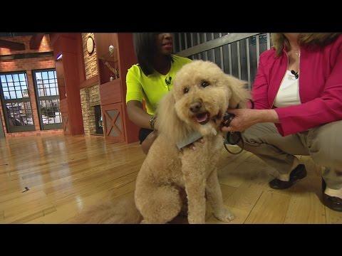 Ollie Dog 1
