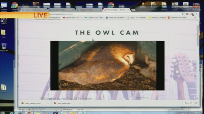 owl cam update 1
