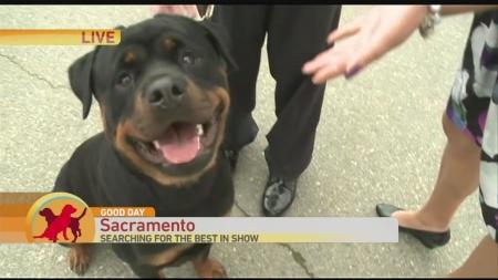 Sac Dog Show 1