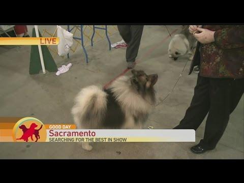 Sac Dog Show 2