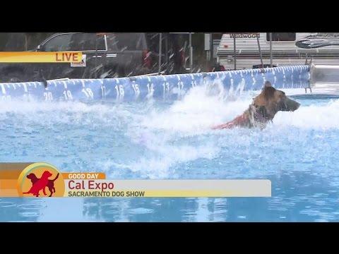 Sac Dog Show 3