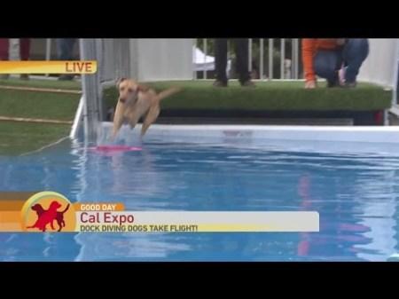Sac Dog Show 4
