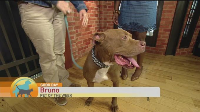 SPCA Bruno 1