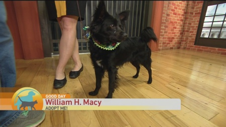 SPCA William H Macy 1