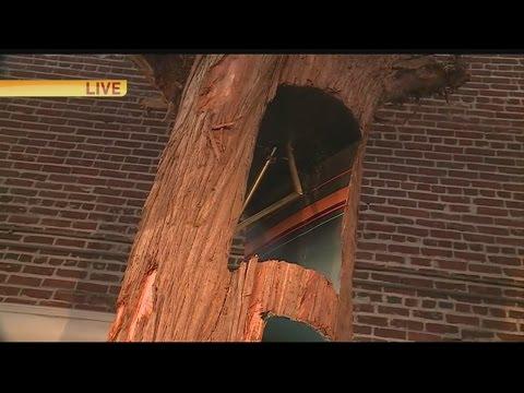 Tree Art 1